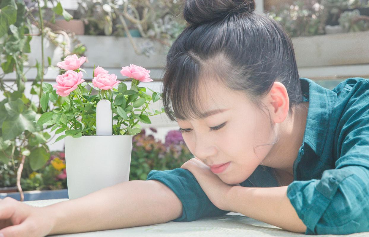 حسگر نظارت بر گل و گیاه-شیائومی   Xiaomi-Smart Plant Monitor