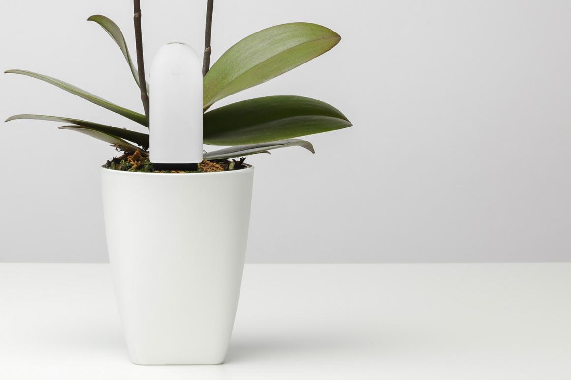Xiaomi Smart Plant Monitor